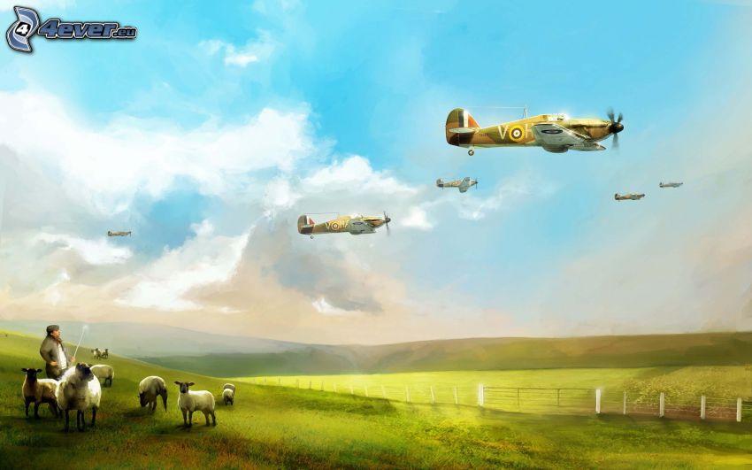 Flugzeuge, Schäfer, Schafe