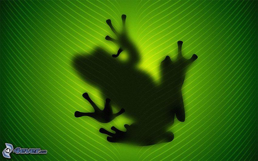 Frosch, Schatten