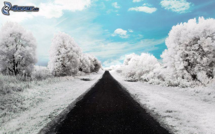 gerade Strasse, verschneite Bäume, Himmel