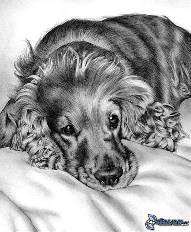cocker spaniel, gezeichneter Hund