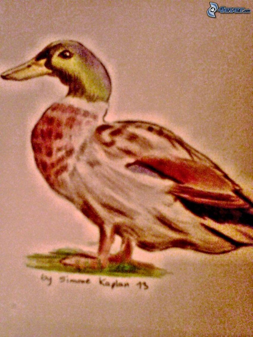 Ente, Zeichnung