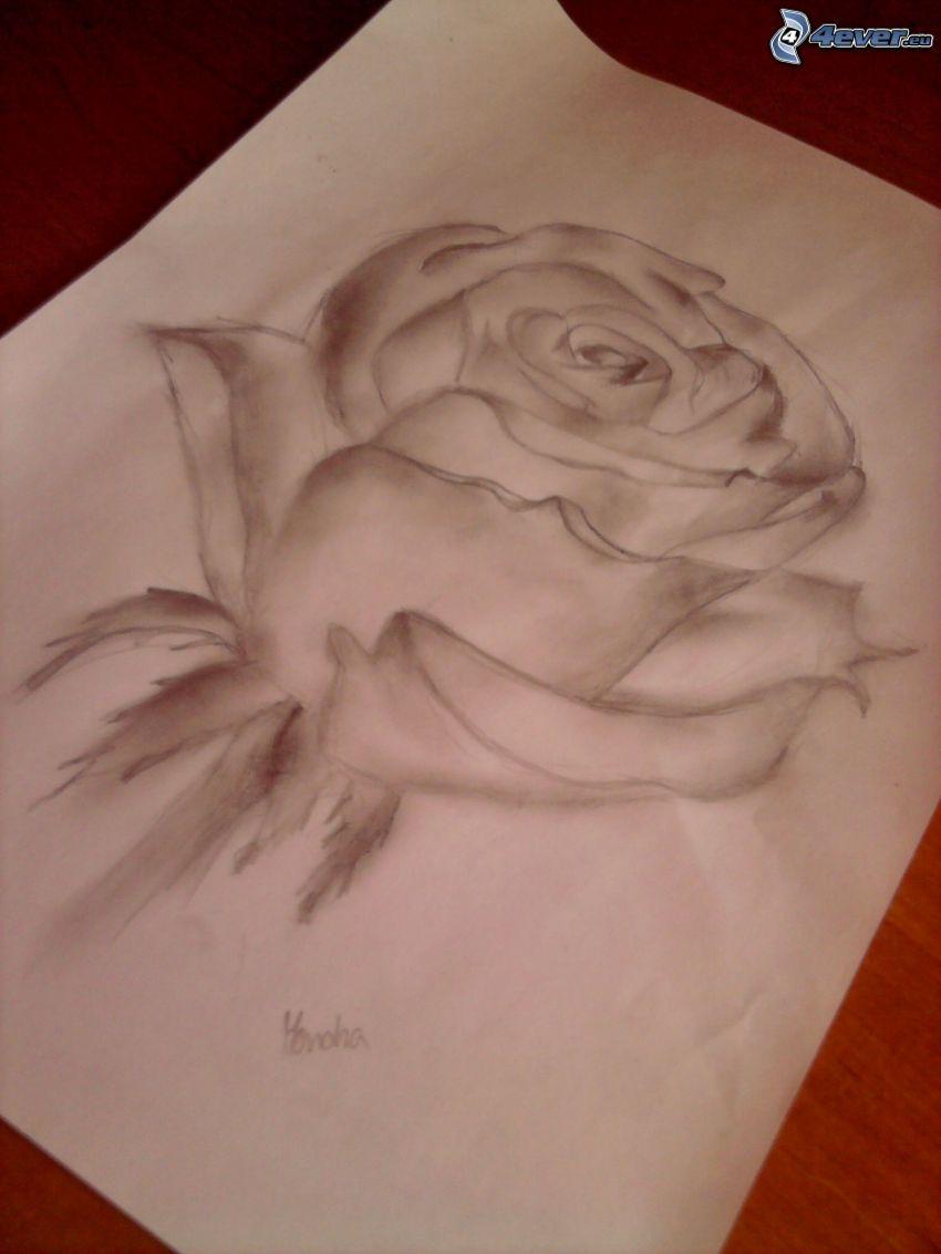 gezeichnete Rose, Papier