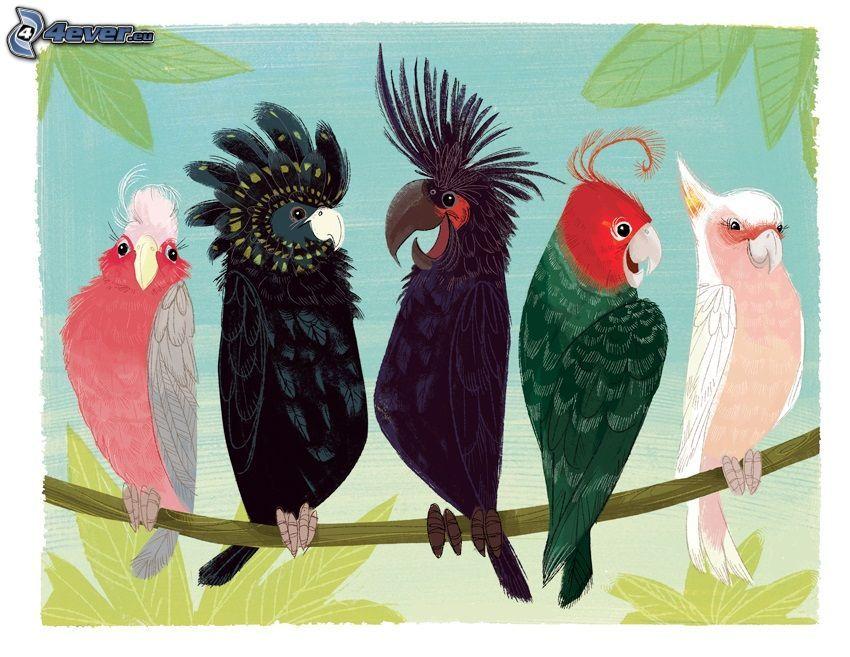 Kakadus, Papageien