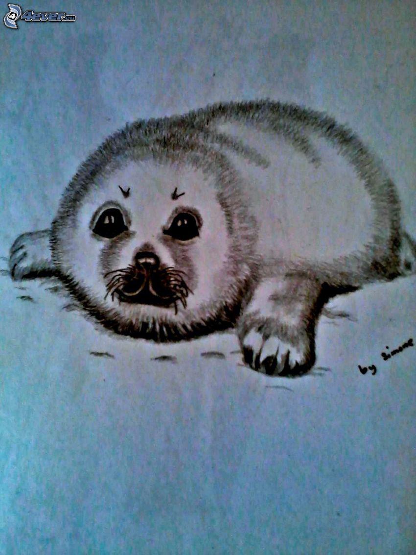 Seehundbaby, Zeichnung