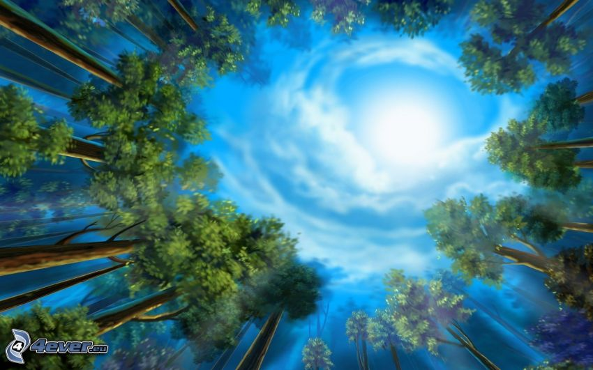 Himmel, Wald, Bäume