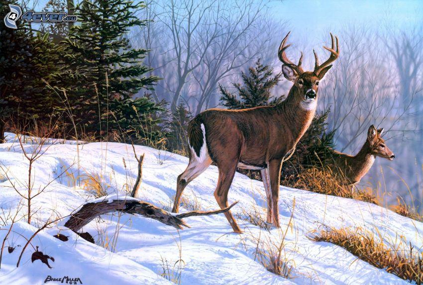 Hirsch, Reh, Wald, Schnee