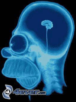 Homer Simpson, Gehirn