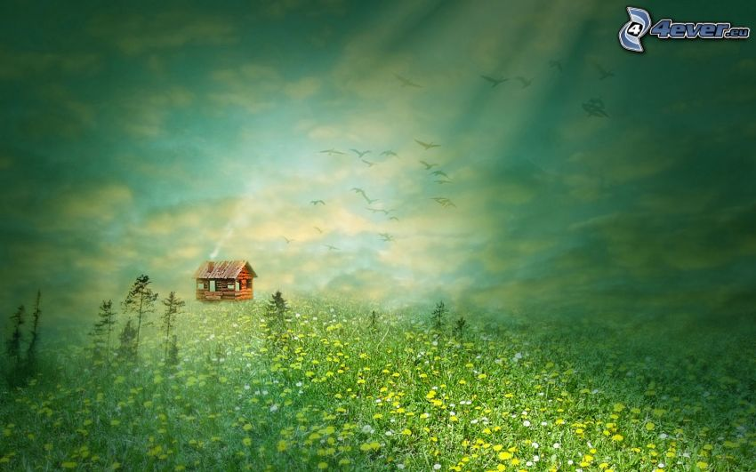 Hütte, Wiese, Sonnenstrahlen