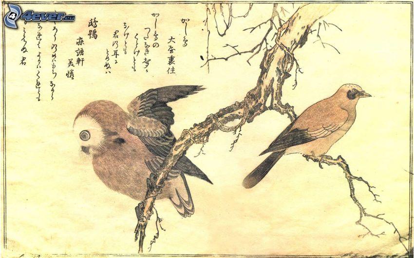 Karikatureule, Vögel, Äste, Bild