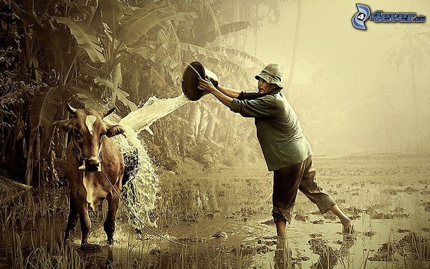 Kuh, Mann, Eimer, Wasser