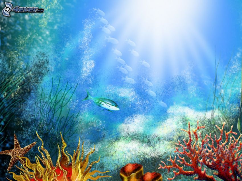 Meer, Fisch, Korallen, Seestern, Sonnenstrahlen