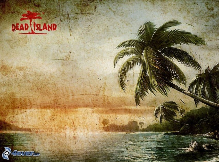 Palmen, Meer