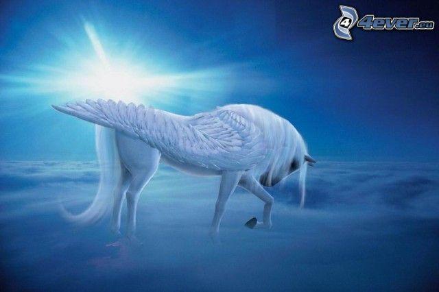 Pegasos, Pferd, Himmel