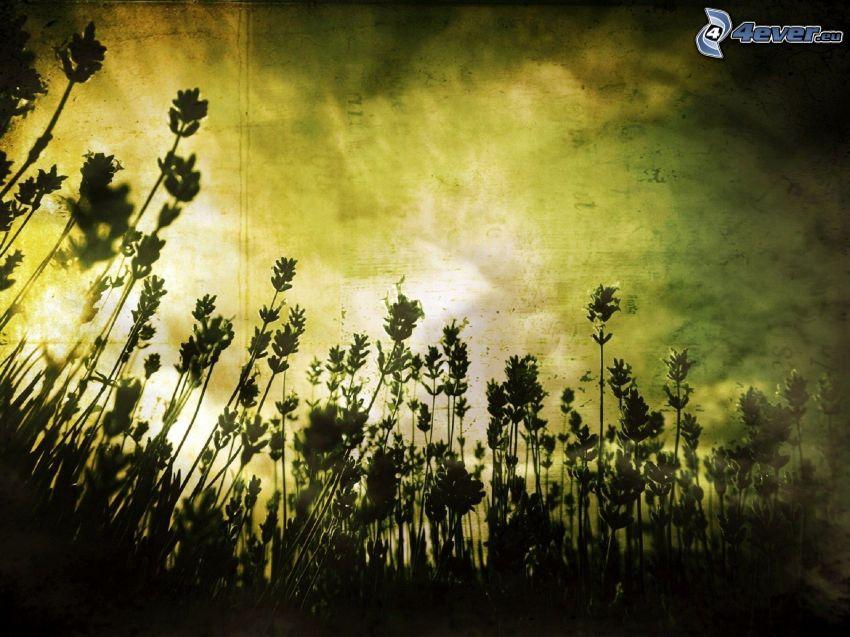 Pflanzen, Feld