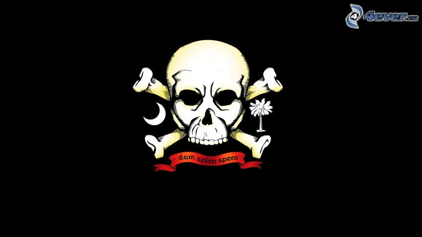 Schädel, Skelett