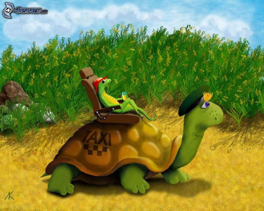 taxi, Schildkröte