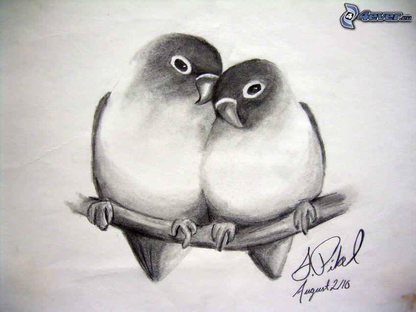 Vögel, Ast