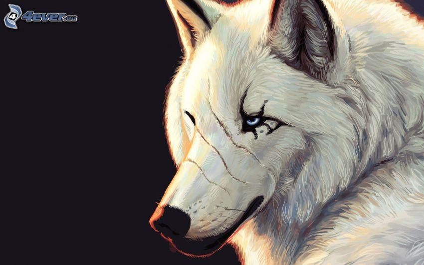 weißer Wolf, gezeichneter Wolf