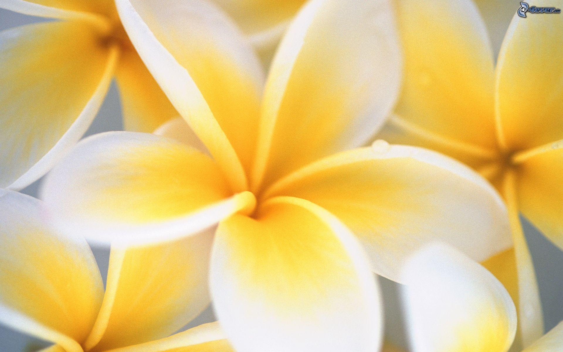 Gelbe Bilder gelbe blume