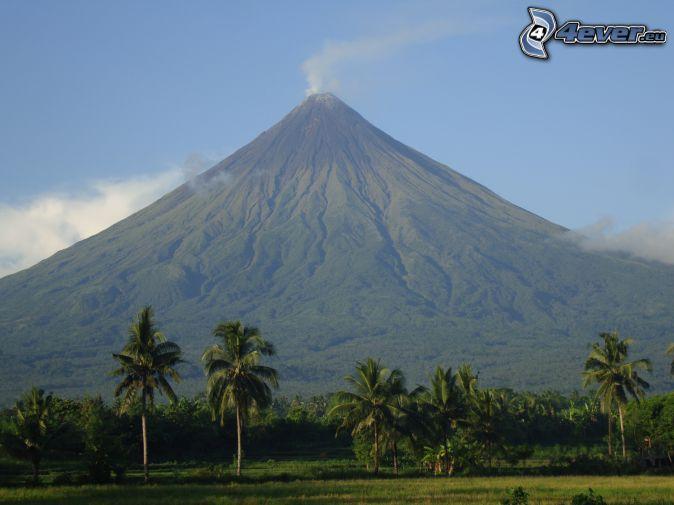 Mount Mayon, palmer, Filippinerna