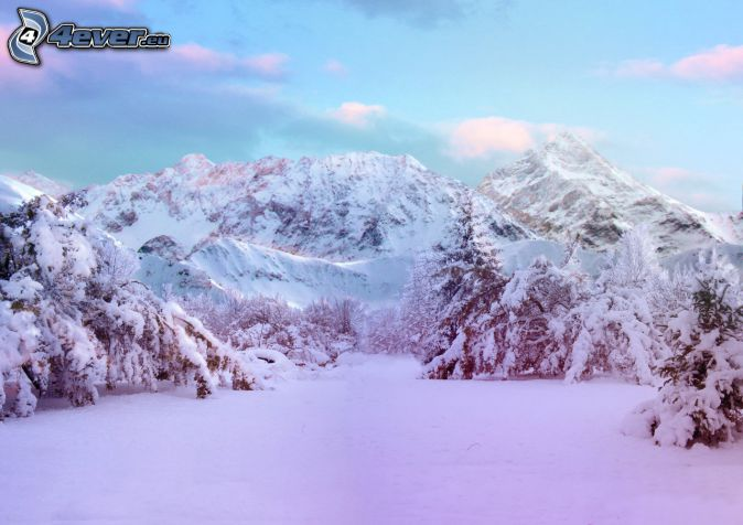 snöklädda berg, snöig äng, snöklädda träd