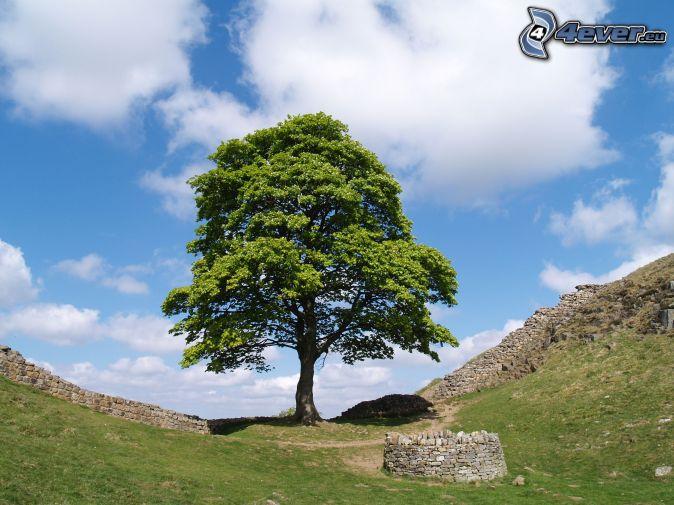 ensamt träd, stenmur, brunn