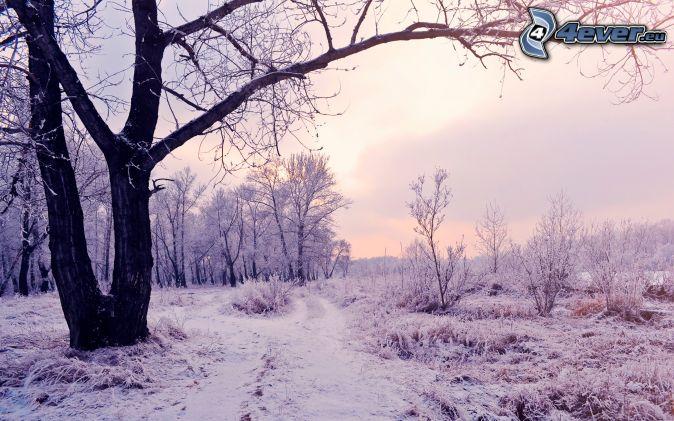 snöigt landskap, kväll