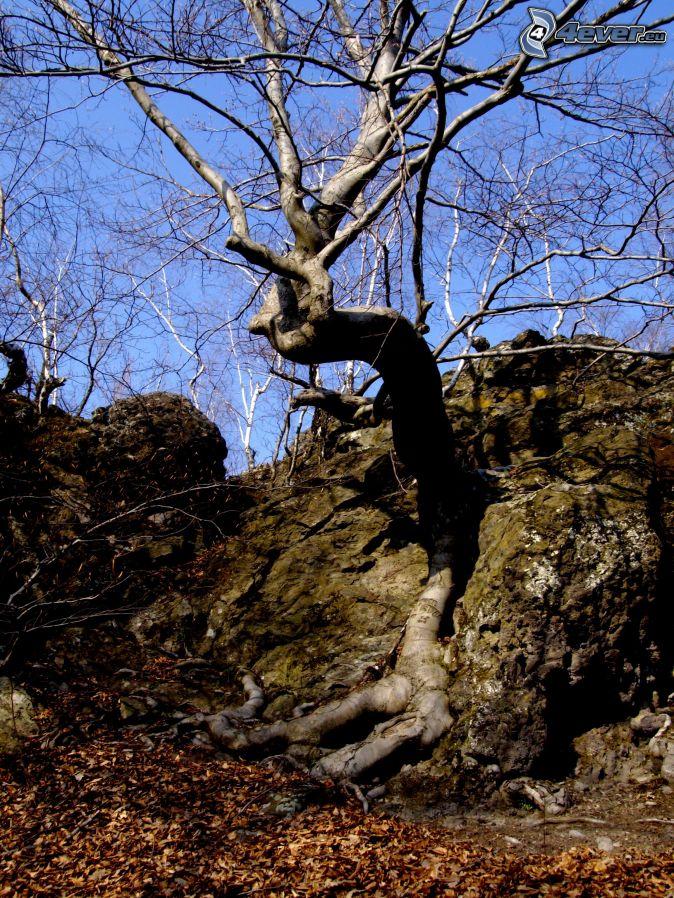 Träd på klippa