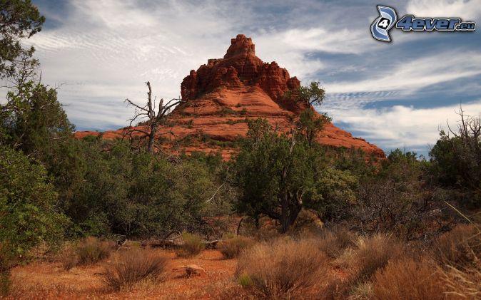 Sedona - Arizona, klippor, träd