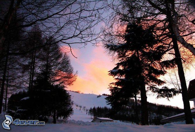 Snöigt landskap siluetter av träd solnedgång