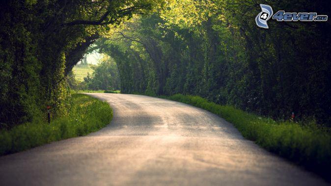 skogsväg, grön tunnel, träd