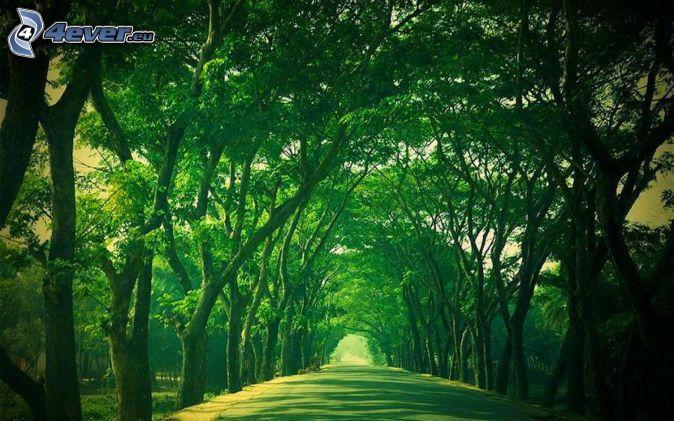 väg, trädgränd, gröna träd