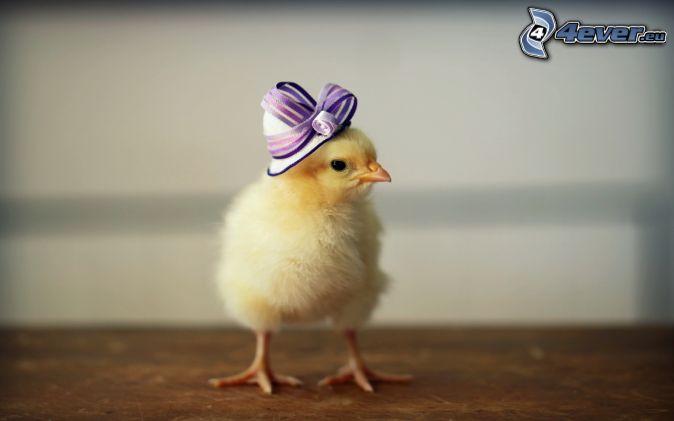 kyckling, hatt