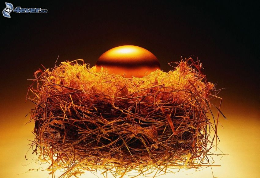 ägg, guld, bo
