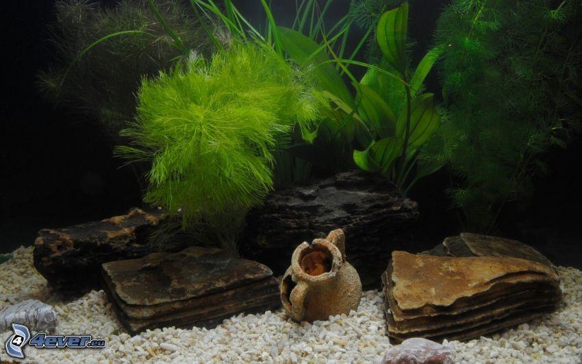 akvarium, stenar, växter, vattenkanna