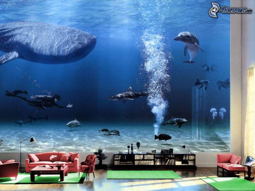 akvarium, tapet, vardagsrum