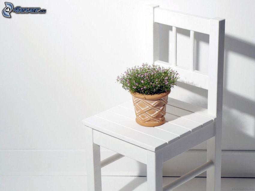 blomma, kruka, stol