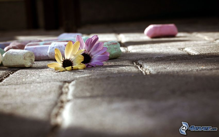 blommor, kritor, beläggning