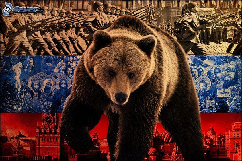 brunbjörn, Ryssland