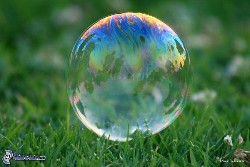 bubbla, gräs