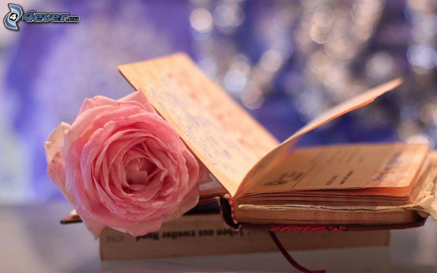 dagbok, rosa ros