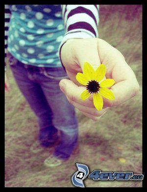 emo, kärlek, blomma