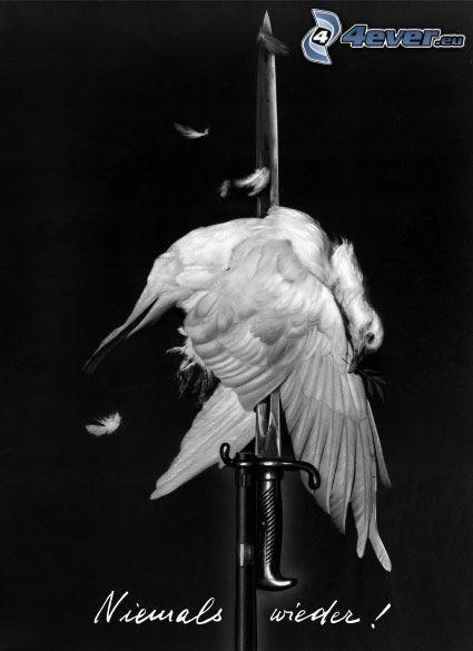fågel, svärd, aldrig