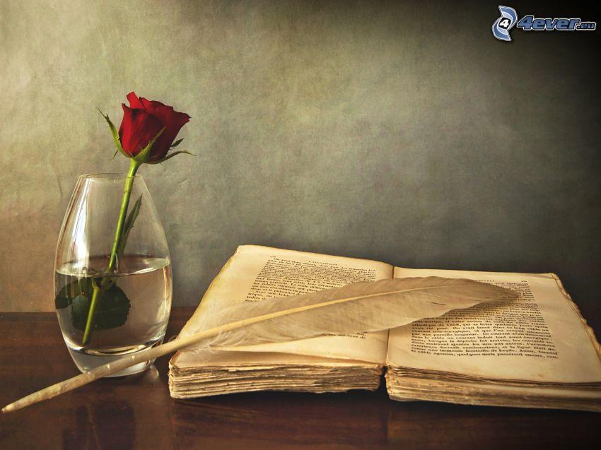 gammal bok, fjäder, röd ros