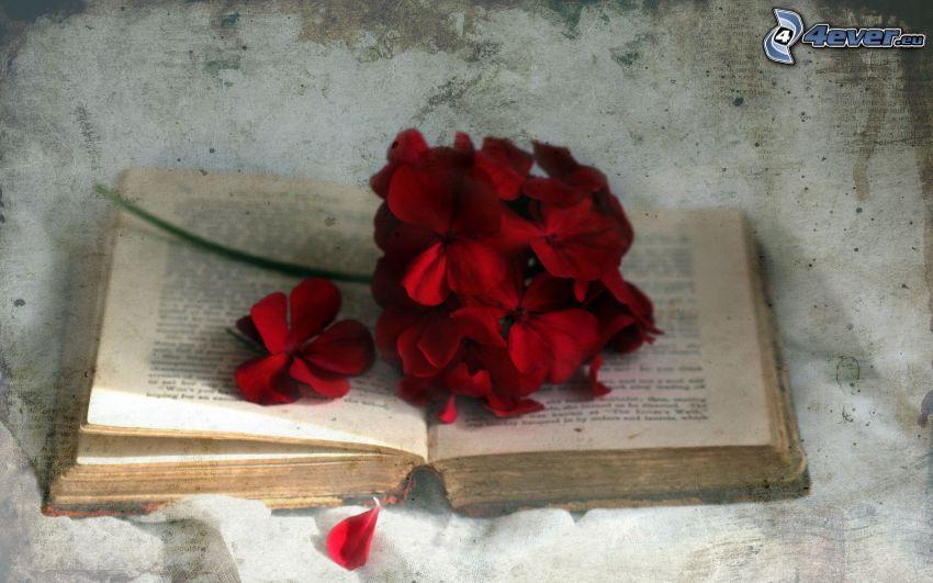 gammal bok, röd blomma