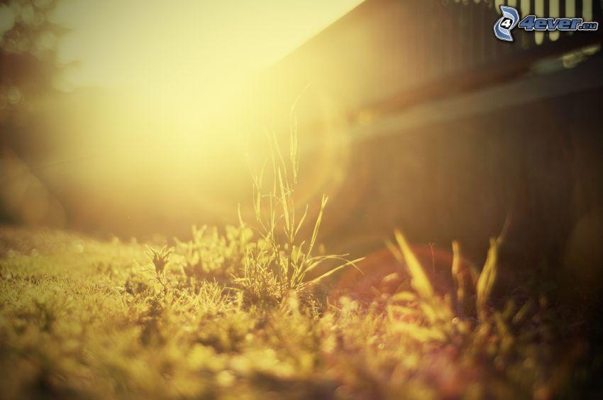 gräs, staket, solsken