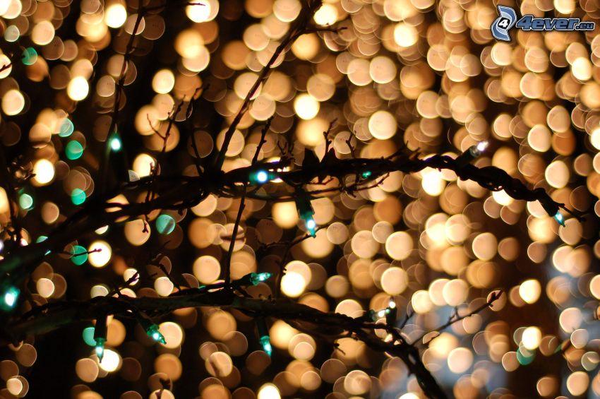 grenar, träd, belysning