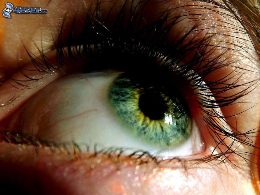 grönt öga, ögonfransar