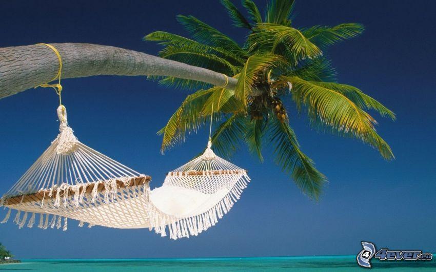 hängmatta, palmträd över hav, azurblå hav