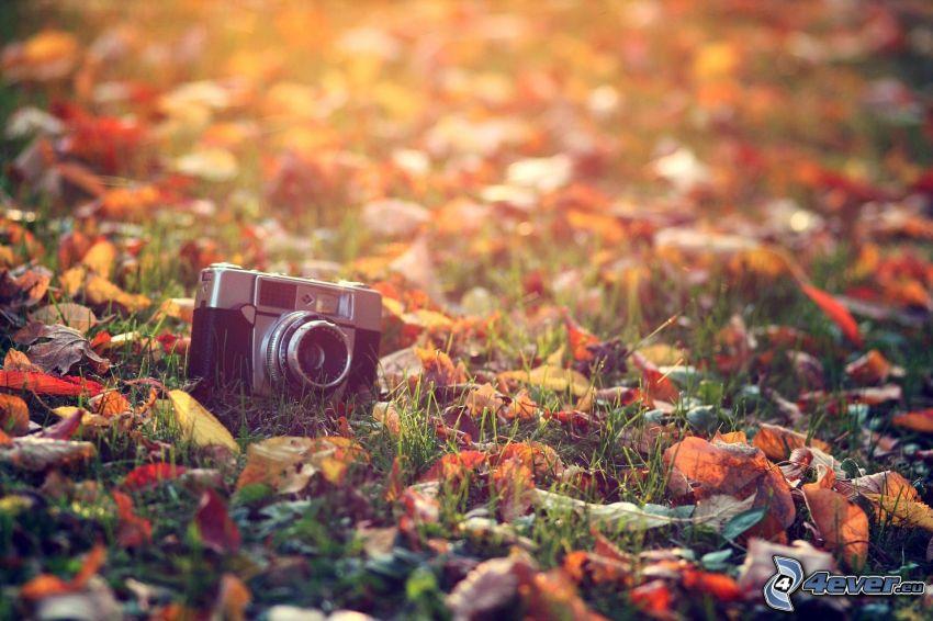 kamera, gräs, torra löv